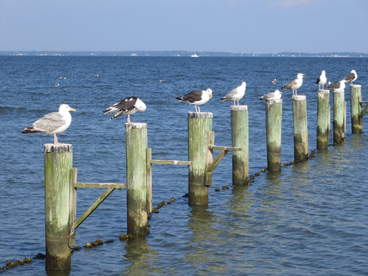 Gulls on the Bay